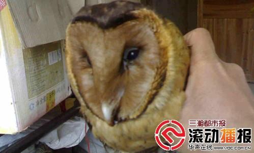 国家二级保护动物猴面鹰