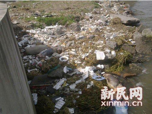 黄浦江上漂死猪 原创 - 馨苑 - 馨苑的博客