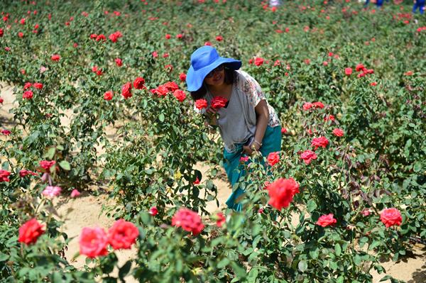 网媒记者走进三亚玫瑰谷感受农业发展新品牌图片