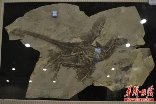 最古老的动物化石年代