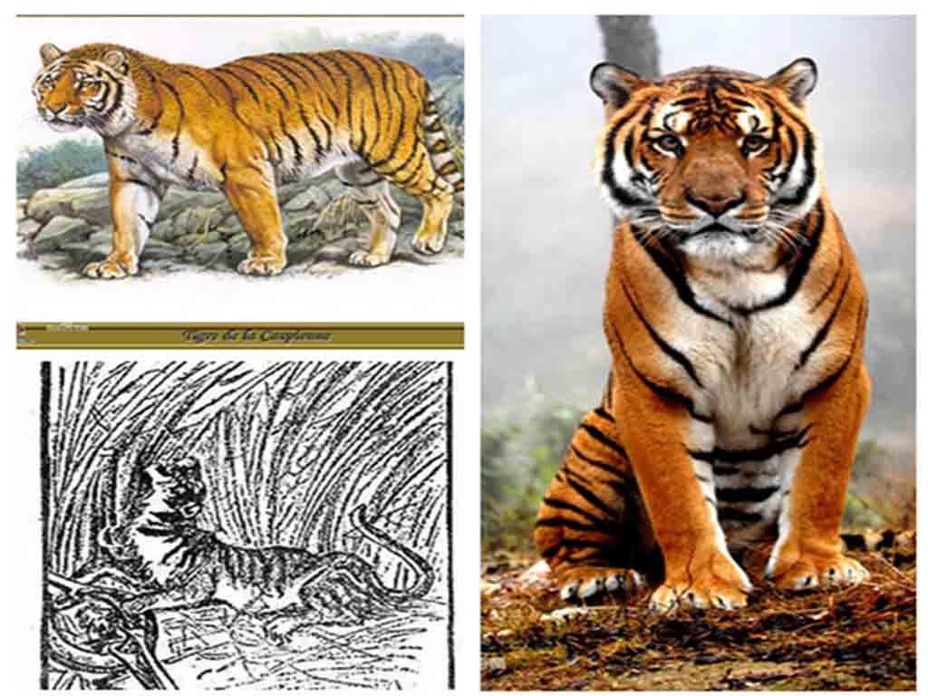 盘点中国近代灭绝的物种