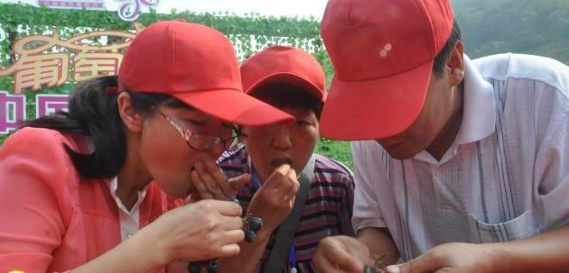 中方县吃葡萄比赛火热进行