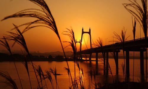 11月17日傍晚,长沙市三汊矶湘江大桥和岸边的芦苇,在