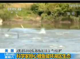 担心破坏生态 美国25年斥百亿美元封杀亚洲鲤鱼