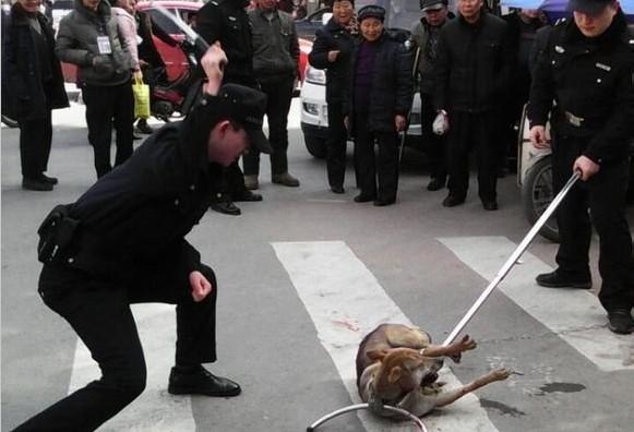 """""""流浪狗""""被警察杖毙"""
