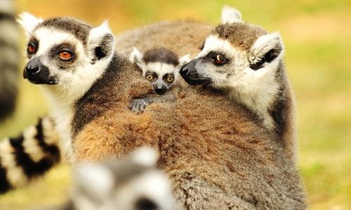 新春的动物宝宝们