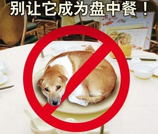[新闻碉堡]吃狗肉与否 其实跟你的祖先有关