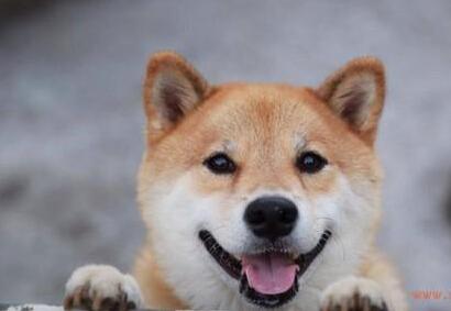 世界上最开心的狗
