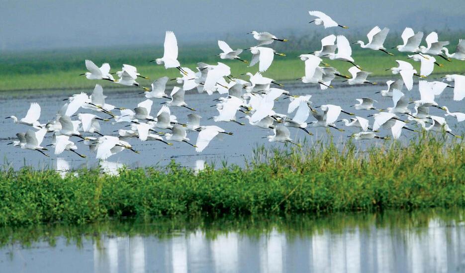"""中国野生动物保护协会授予""""中国观鸟之都"""""""