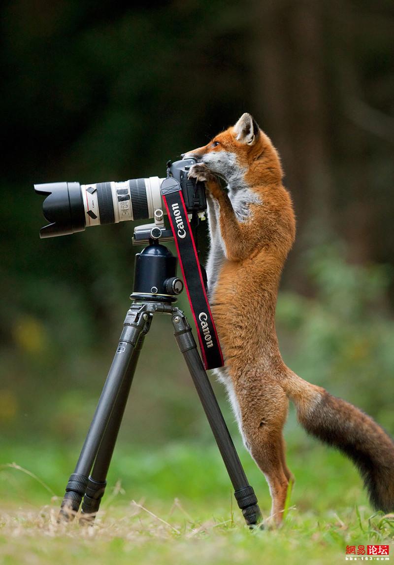 野生动物也会模仿起人类的动作