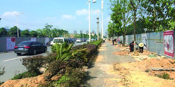 长沙福元路砍树为渔业路隧道出入口让行