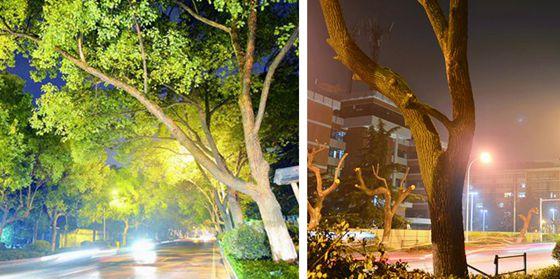 长沙回应麓山路移树:能不移的一棵都不移