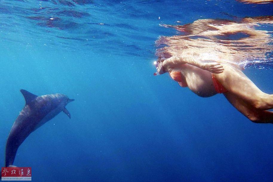 美国女子海中分娩让海豚助产 将在电视上直播