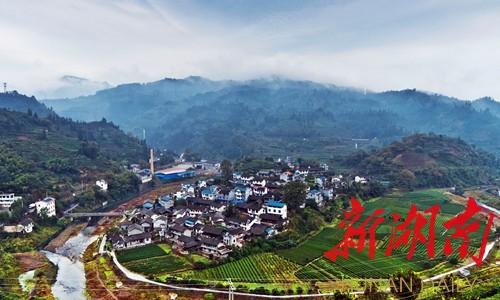 11月3日,古丈县古阳镇树栖柯村,雨后的村庄清新宁静,茶园,民居和群