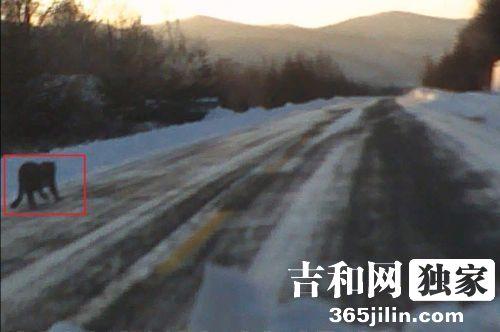 动物奔跑山间公路