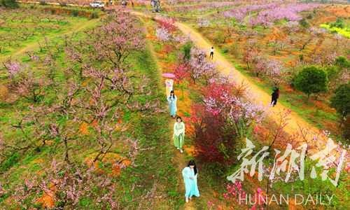 去衡阳县樟木乡的桃花园偶遇穿汉服的妞