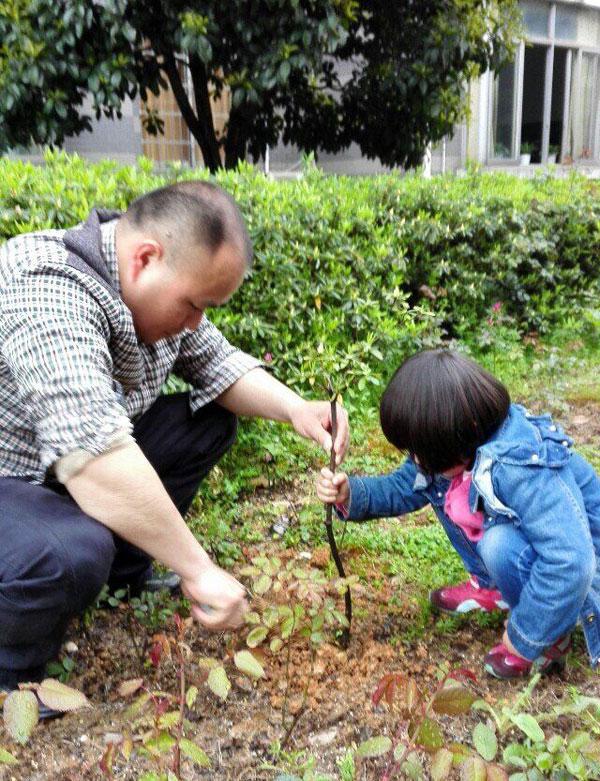 以班级为单位,给幼儿园内的小树浇水,松土,修枝叶等.