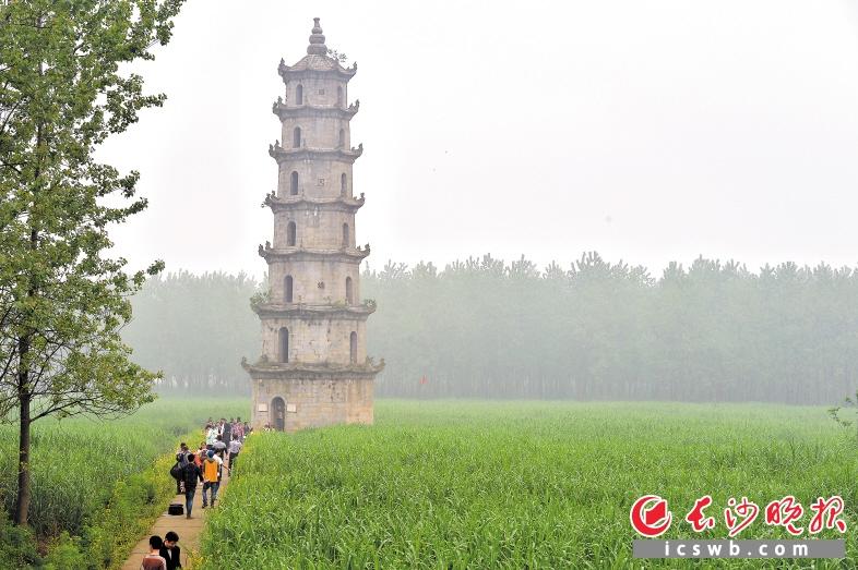 ↑凌云塔成为南洞庭的一个标志性古塔,周边自然生态美好。