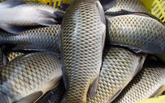 这才是鱼最营养的部位 你吃对了吗?