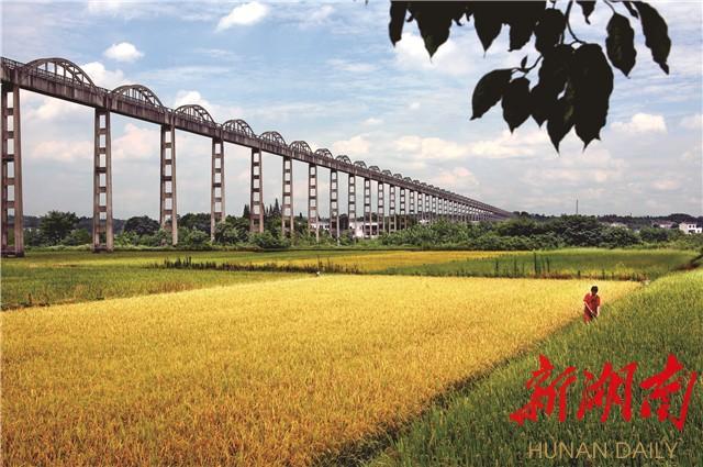 长沙县又辟一条全民致富