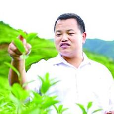 """王依清:""""社民共富"""" 君健中药材合作社开创扶贫新模式"""