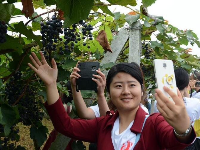 【网络媒体走转改】水果产业助力菖蒲塘村脱贫致富