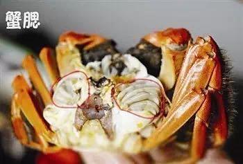 哪些部位不能吃?正确吃螃蟹姿势get!
