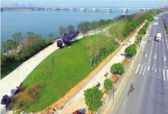 9月19日,长沙市开福区湘江风光带金霞段一期建设现场,施工人员在修建透水混凝土道路。湘江风光带金霞段长4.5公里,拟投资2.55亿元。其中一期(冯蔡路三环线)绿化景观提质改造工程于去年12月开工,预计本月底该段的绿化、园林建设可全面完成。 记者 田超 摄