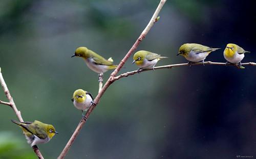 燕子巧手编织动物