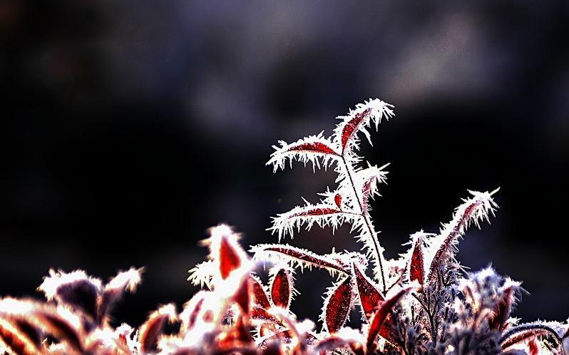 最后一个节气 霜降