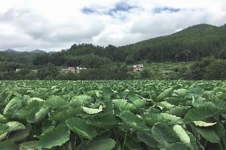 湖南省农委扶贫:鼓了村民口袋更富了村民脑袋