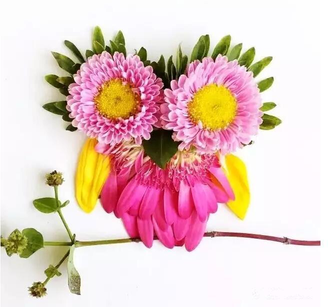 这是西雅图的艺术家 Bridget Collins 一组漂亮的鲜花拼图。 在Collins的巧手下,一朵花瓣、一片绿叶、一根嫩树枝、一颗自然坠下的果实都是灵感的源泉,用这些材料,她拼出了许许多多美丽的艺术品。