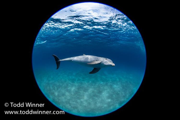 十组照片告诉你,鱼眼镜头水下妙用