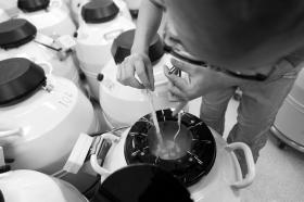 冷冻胚胎11年,42岁女子即将生产