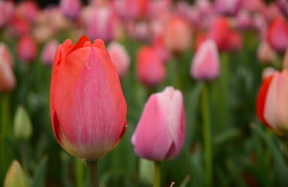 """9场主题花展、6场主题活动持续到5月 省森林植物园奏响""""春之歌"""""""