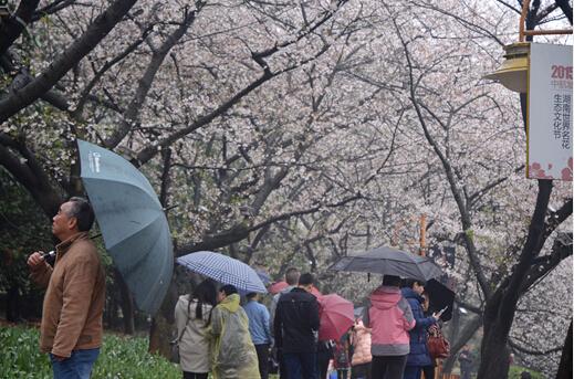 阴雨天不蓝瘦,省植物园繁花似锦带给您绚丽心情