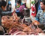 防控H7N9流感 今起长沙市活禽交易休市21天