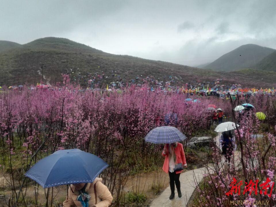 3月18日上午9时,为期10天的江永县首届紫荆花文化旅游节,在松柏瑶族乡