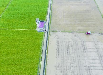 田间地头活力来--春耕一线看湖南农业供给侧结构性改革新变化