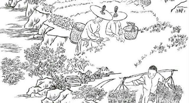 湖湘物候丨此时江南春正好 遍试溪茶与山茗