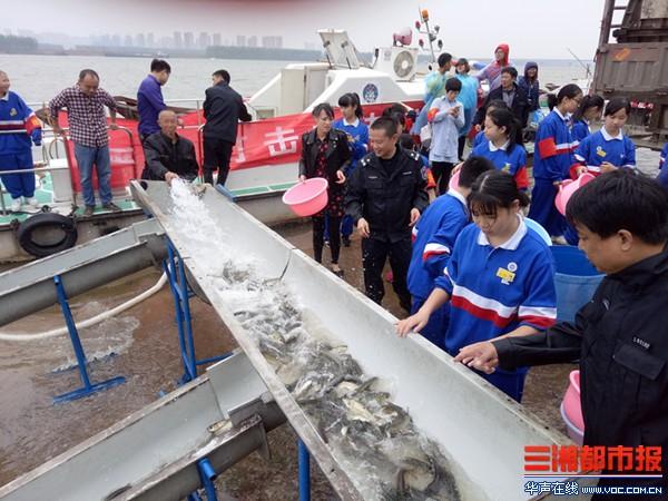 增殖放流,100万尾鱼放入湘江