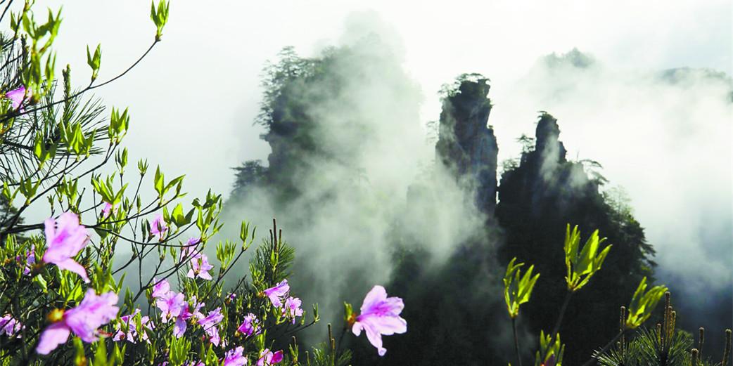 张家界武陵源天子山风景区:雨后云海 波澜壮阔