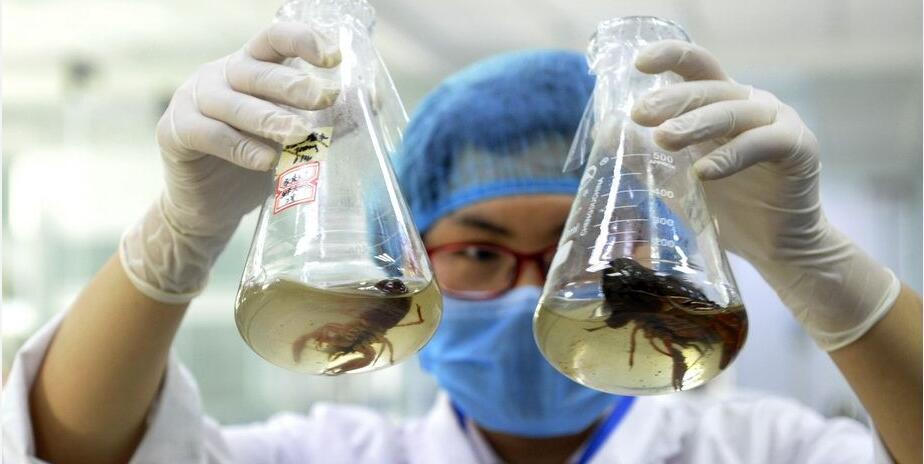 西安:三份小龙虾样品 两份检出寄生虫