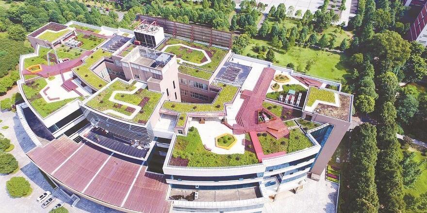 空中花园 校园新景