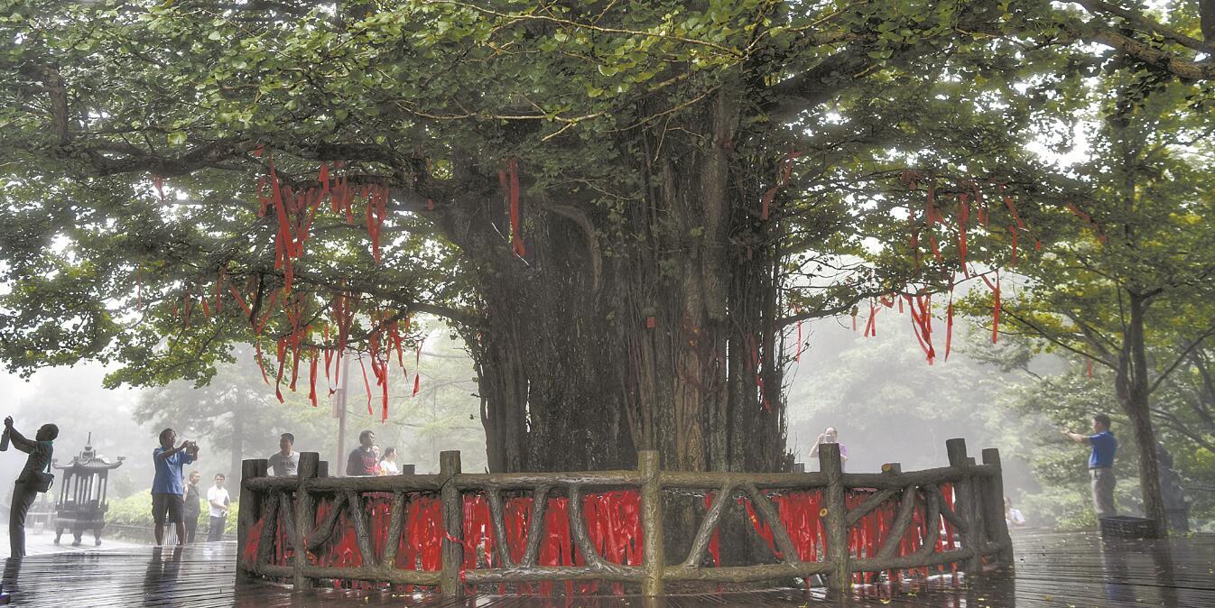 观千年古树 品梅山文化