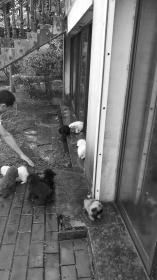 长沙一别墅地下室养20多条狗 居民担心滋生细菌和狗狗扰民