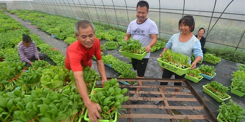 种蔬菜 助脱贫