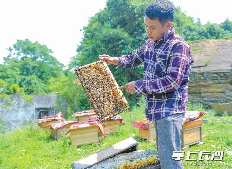 浏阳文家市镇岩前新村是个贫困村,村民张运通近几年通过养蜂脱贫致富,还成了脱贫带头人。长沙晚报记者 邹麟 摄