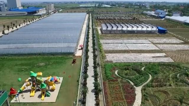 新跨越:跨步迈进农业强省