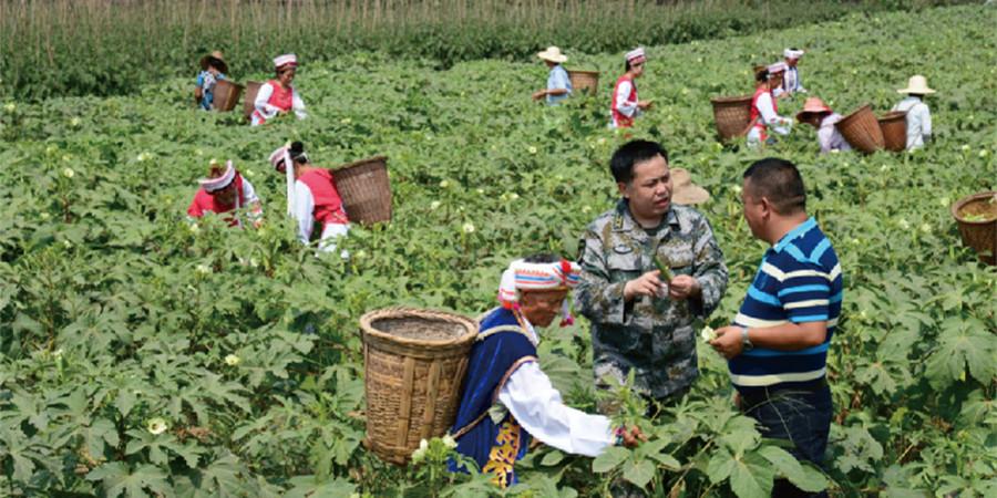 [砥砺奋进的五年・成就展]湖南省军区驻桑植部队积极参与脱贫攻坚战